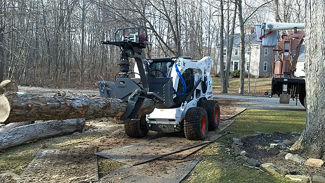 bobcat-tree-removal