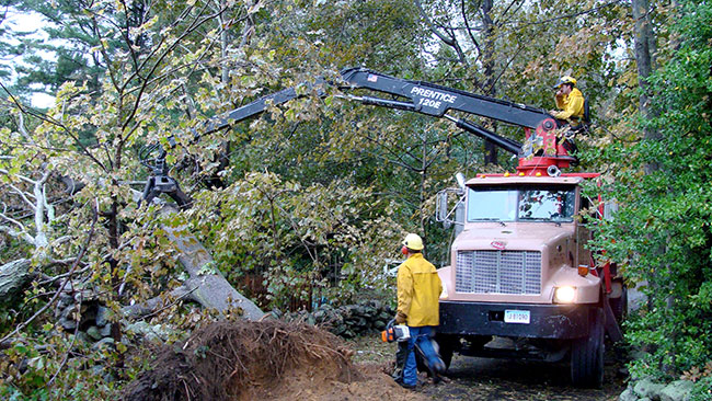 tree-removal-equipment
